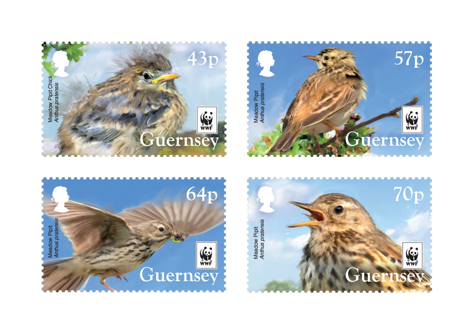 2017 WWFMeadow Pipit Set of 4